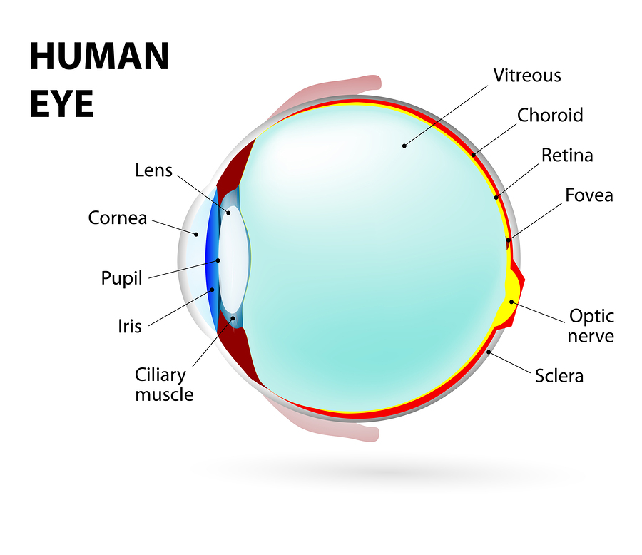 How Your Eyes Work and Common Eye Conditions as You Age